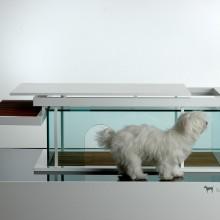 transparent-front-dog